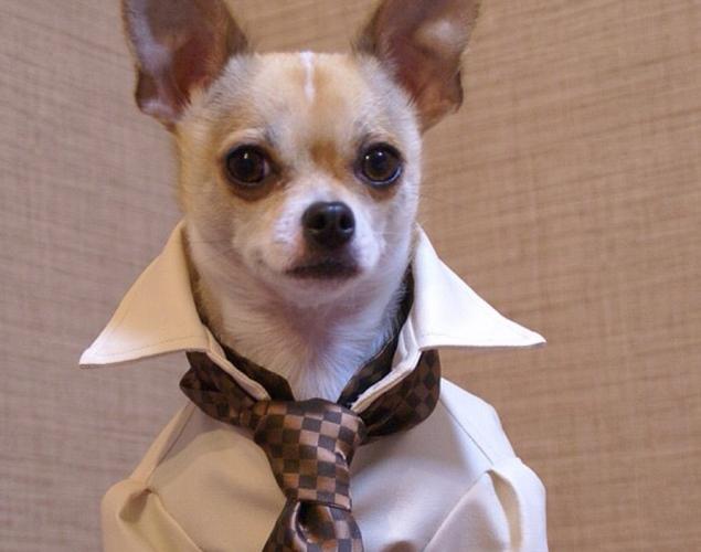 world-best-dressed-dog-1