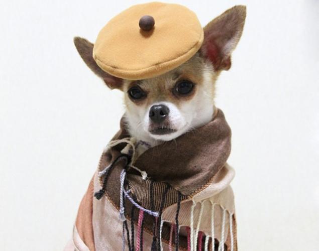 world-best-dressed-dog-10