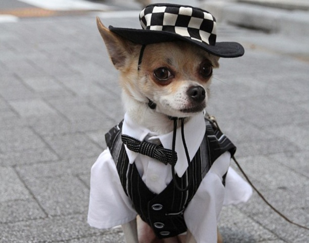 world-best-dressed-dog-11