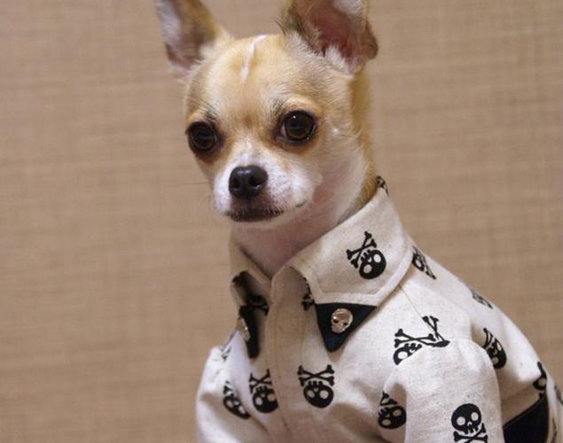 world-best-dressed-dog-5