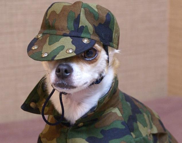 world-best-dressed-dog-6