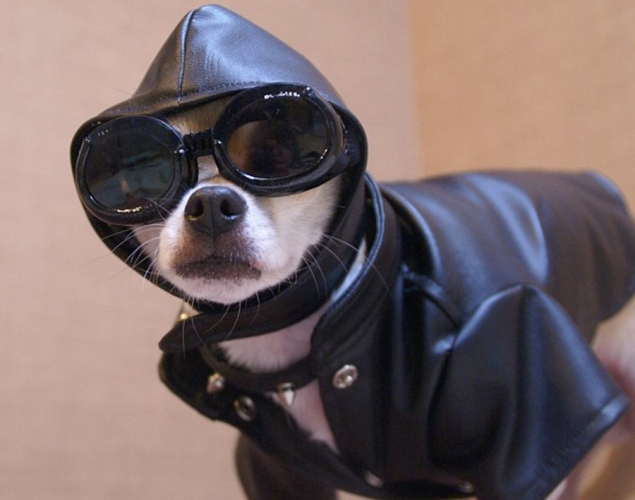world-best-dressed-dog-8