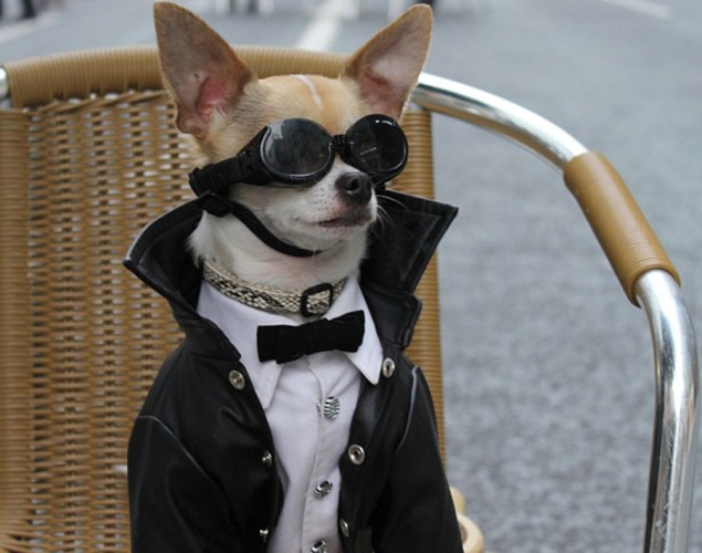 world-best-dressed-dog-9