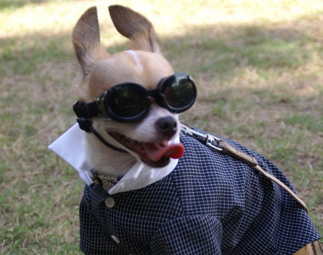 world-best-dressed-dog