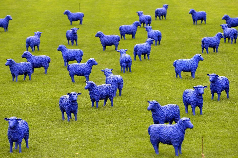 """Hamburg'ta Rainer Bonk ve Bertamaria Reetz adlı sanatçıların açtığı açıkhava sergisinin adı; """"Mavi Barış Flock"""". Mavi koyun heykelleriyle demek istedikleri, """"Herres eşittir, herkes önemlidir""""..."""