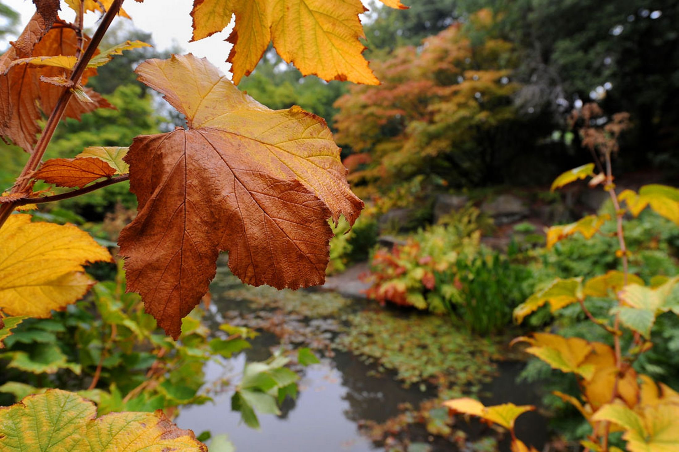 Autumn-colours-begin-to-show-at-the-Birmingham-Botanical-Gardens-Edgbaston-18th-October-2641173