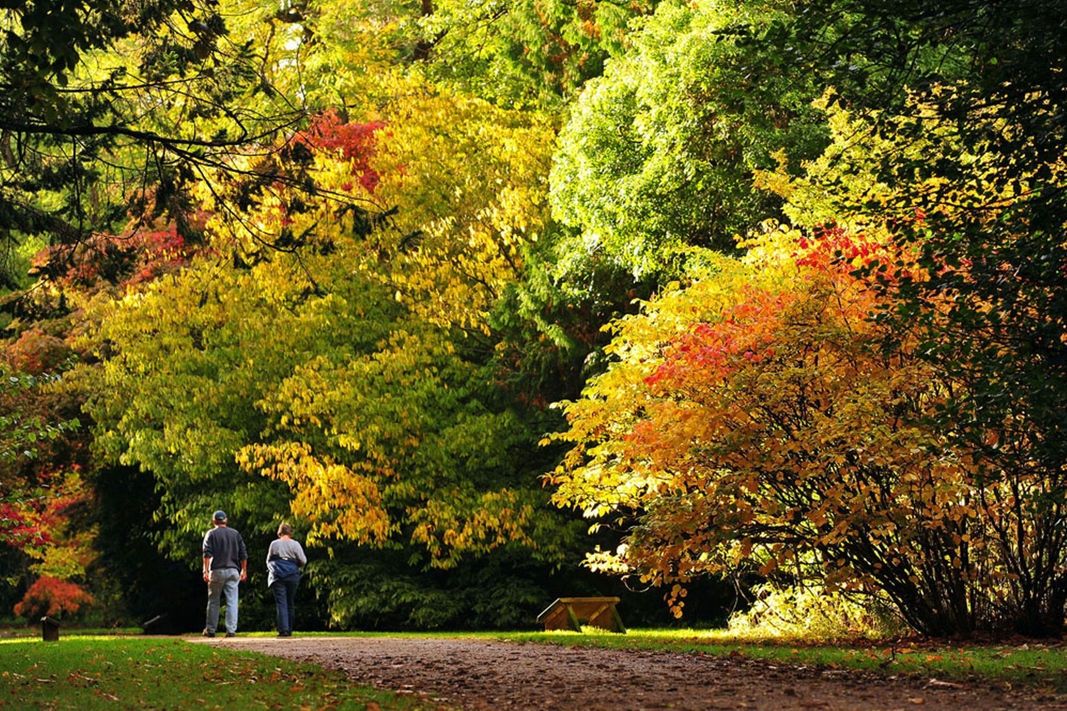 People-enjoy-the-emerging-Autumn-Colours-at-Westonbirt-Arboretum-17th-October-2641166