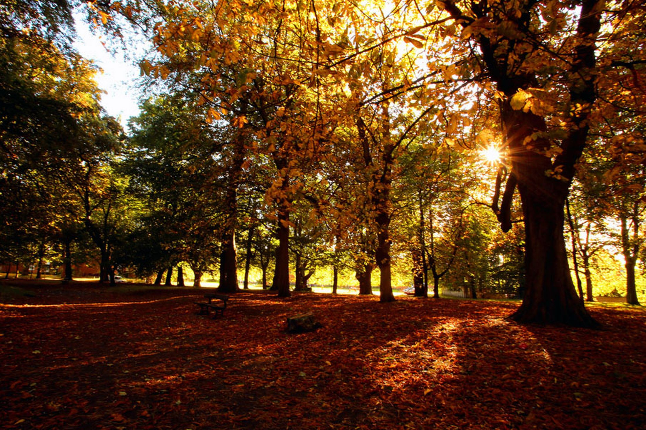 Sunshine-casts-shadows-from-the-trees-in-Sefton-Park-Liverpool-10th-October-2641157
