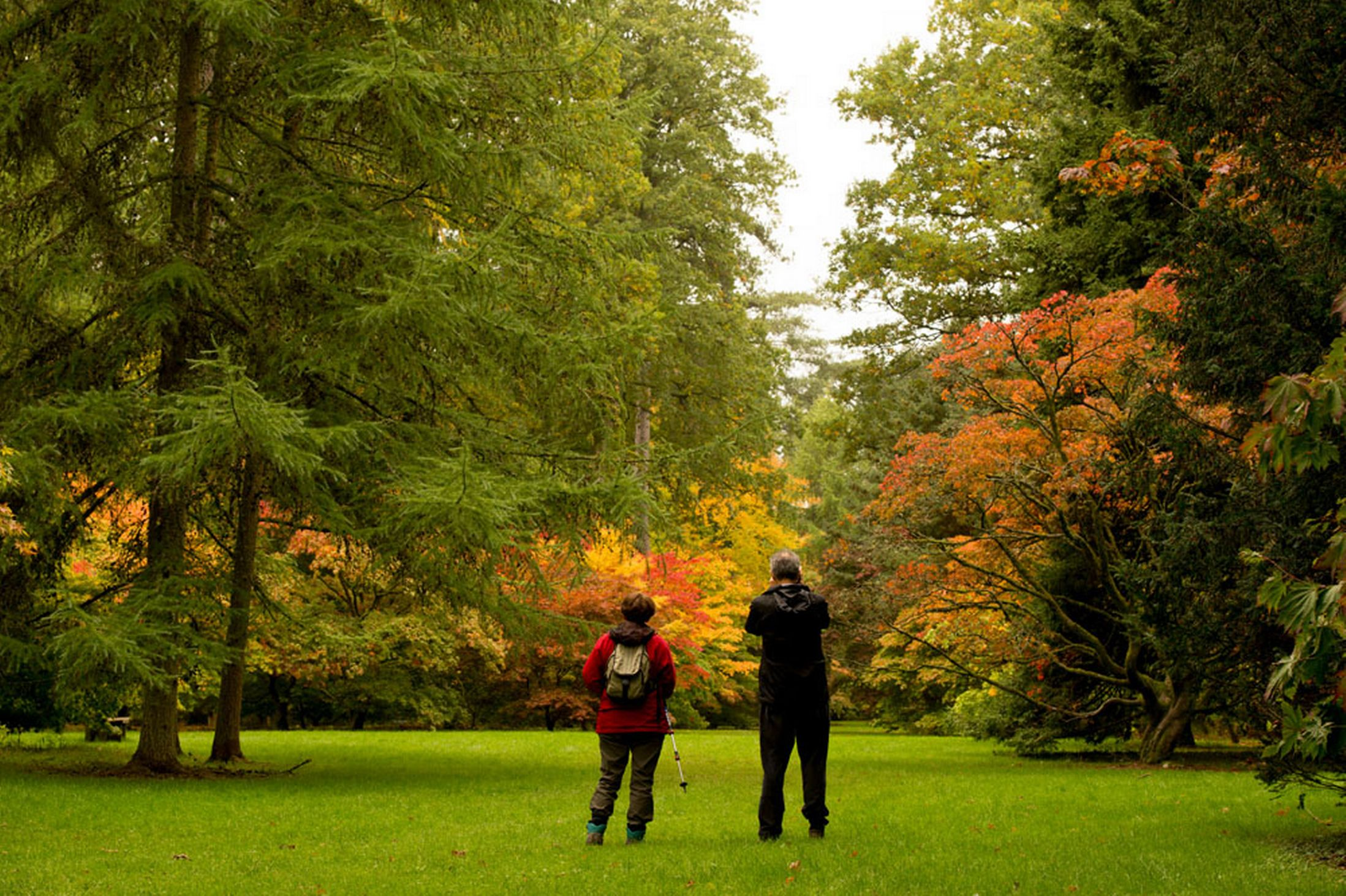 Westonbirt-arboretum-18th-October-2641145