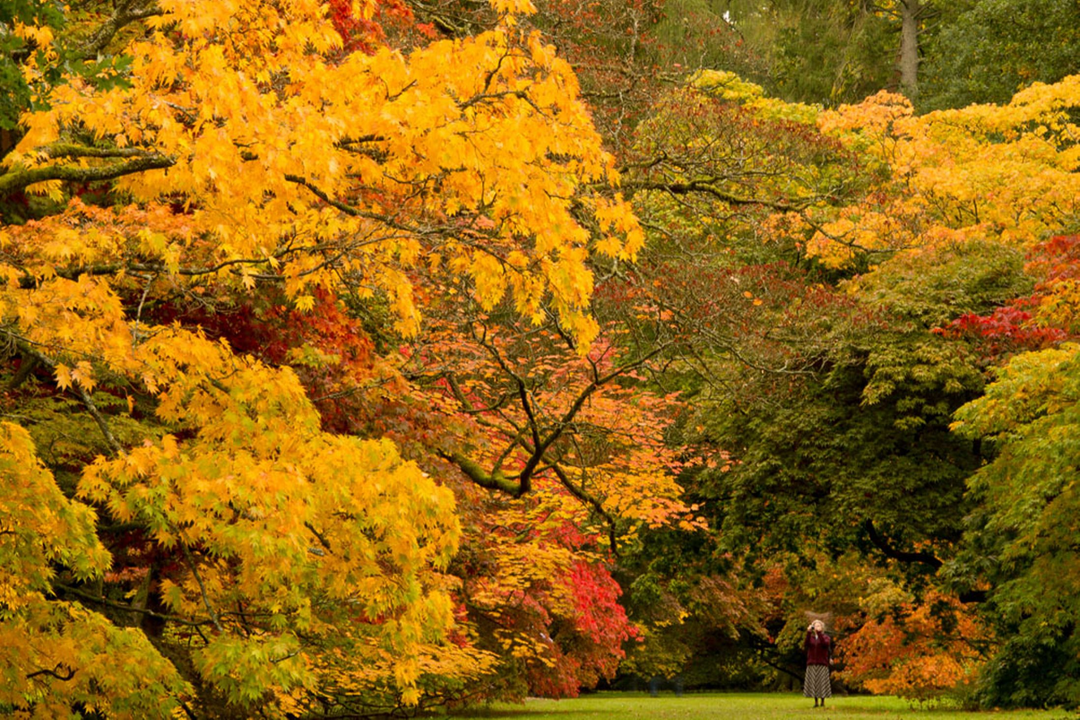 Westonbirt-arboretum-18th-October-2641171