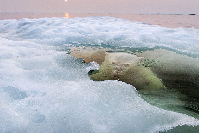 BÜYÜK ÖDÜL: Paul Souders'in çektiği kutup ayısı