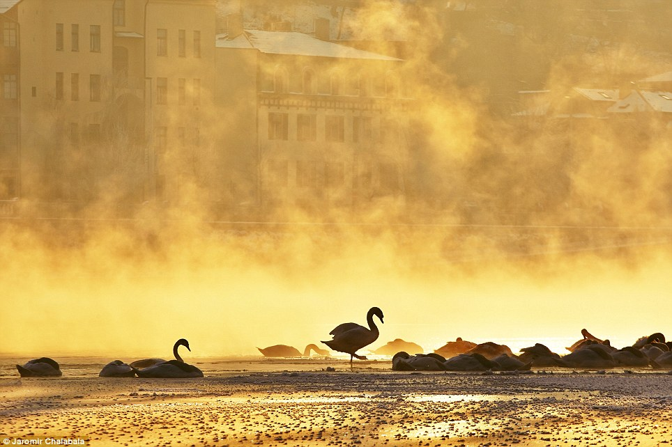 Prag Vltava nehri üzerinde kuğu, bulutlar ve siluet... Read more: http://www.dailymail.co.uk/news/article-2536871/Golden-Hour-world-Breath-taking-photographs-National-Geographic-readers-capture-magical-sunrises-sunsets-globes-impressive-places.html#ixzz2pxthYM1t  Follow us: @MailOnline on Twitter | DailyMail on Facebook