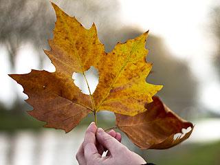 leaf-320