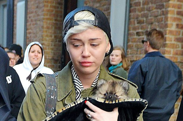 Main-Miley-3380483-1