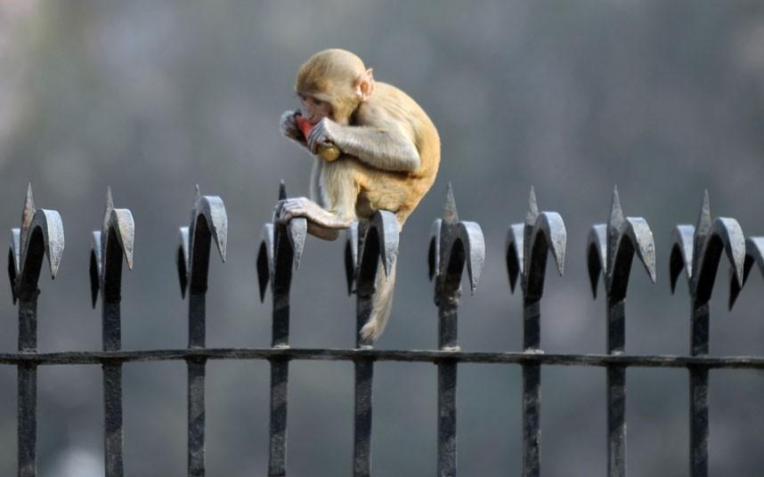 wildlife-delhi_2922687k